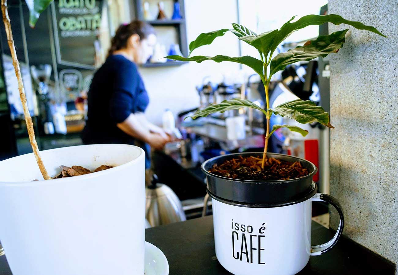 Resultado de imagen para brasil calles cafe